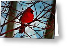 Red White And Blue Cardinal Greeting Card