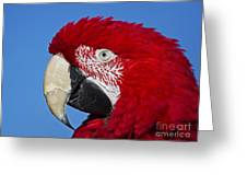 Red White And Blue... Greeting Card