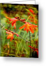 Red Wild Flowers Greeting Card
