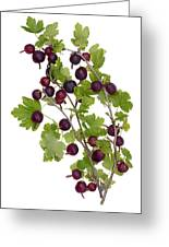 Red Wild Forest Berries Greeting Card