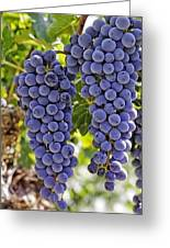 Red Wine Grapes Hanging On The Vine Greeting Card