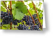 Red Wine Vineyard 3 Greeting Card