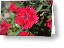 Red Winery Flower Greeting Card