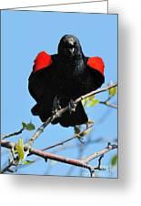 Red Wing Blackbird 1 Greeting Card