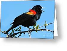 Red Wing Blackbird 2 Greeting Card