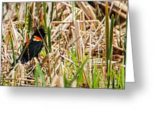 Red-wing Hiding Greeting Card