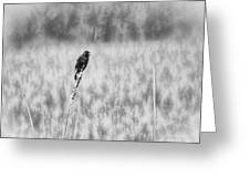 Red-wing Singing In The Marsh Greeting Card