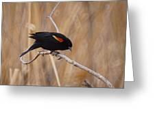 Red Winged Blackbird 1 Greeting Card by Ernie Echols