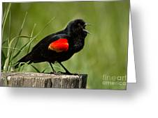 Red-winged Blackbird Singing Greeting Card