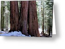 Red Wood Tree Greeting Card