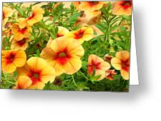 Red Yellow Morning Glories Greeting Card