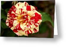 Red Yellow Rose Greeting Card