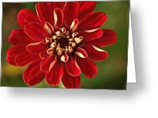 Red Zennia Greeting Card