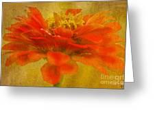Red Zinnia Essence Greeting Card