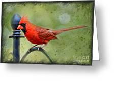 Redbird Alert Greeting Card