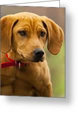 Redbone Coonhound - Man's Best Friend The Hound Dog Greeting Card