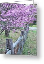 Redbud And Fence Greeting Card