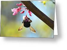 Redbud And The Bumble Greeting Card