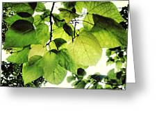 Catalpa Branch Greeting Card