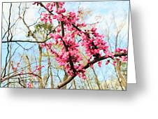 Redbud Buds Greeting Card