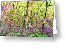 Redbud Cercis Canadensis Trees Greeting Card