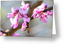 Redbud Pollinator Greeting Card