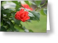 Redbud Greeting Card