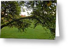 Redbud Tree In Autumn Greeting Card
