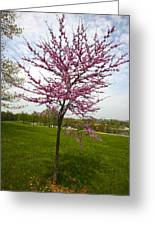 Redbud Tree Greeting Card by John Holloway