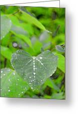 Redbud Water Droplets Greeting Card