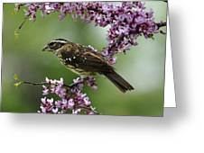Redbud With Grosbeak Greeting Card
