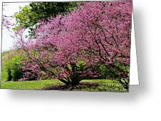 Redbuds In Action Greeting Card