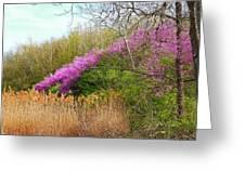 Redbuds In Bloom Greeting Card