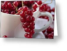 Redcurrant Close Up Greeting Card