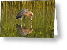 Reddish Egret Reflection Greeting Card
