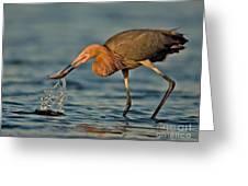 Reddish Egret Strike Greeting Card