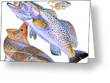 Redfish Trout Greeting Card