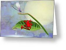 Redfrog And The Dragonfly Greeting Card