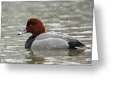 Redhead Duck In A Winter Snow Storm Greeting Card