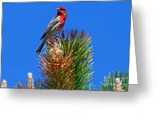 Redheaded Tree Topper Greeting Card