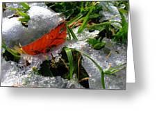 Redleafgrasscomp 2009 Greeting Card