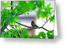 Redneck Humming Bird Greeting Card