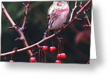 Redpoll On Crabapple Tree Greeting Card
