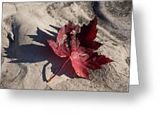 Reds And Purples - Deep Red Maple Leaf And Its Shadow Greeting Card