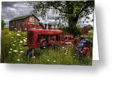 Reds In The Pasture Greeting Card