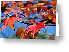 Reds Of Autumn Greeting Card