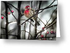 Reds Of Winter Greeting Card