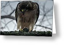 Redtail Hawk And Mouse Greeting Card