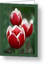 Redwhitetulips6838-1 Greeting Card