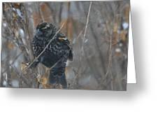 Redwing Blackbird Immature Male  Greeting Card